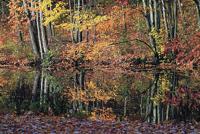 Autumn Colors Reflect Print by Karol Livote