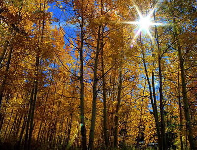 All Around Us Photograph - Autumn Days In Colorado by Fiona Kennard