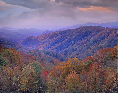 Animalsandearth Photograph - Autumn Deciduous Forest Great Smoky by Tim Fitzharris