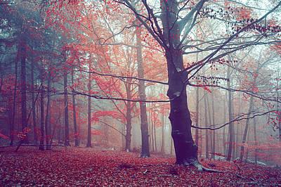 Photograph - Autumn Dreams Of Oak Tree by Jenny Rainbow