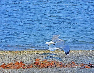 Flying Seagull Mixed Media - Autumn Duet by Lynda Lehmann
