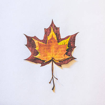 Autumn Fire Print by Kate Morton