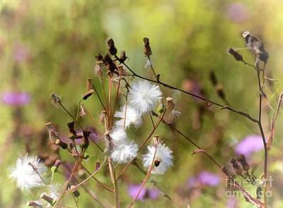 Autumn Photograph - Autumn Flowers by Kerri Farley