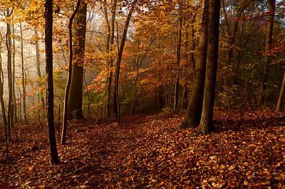 Autumn Forest Print by Ann Bridges