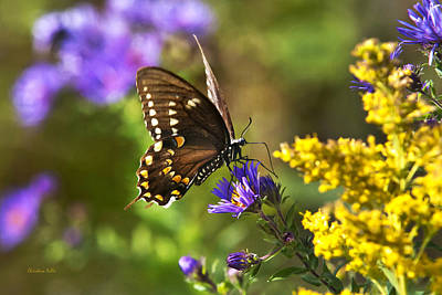 Autumn Garden Butterfly Print by Christina Rollo