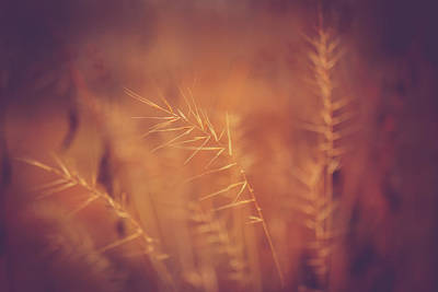 Virginia Photograph - Autumn Grass by Shane Holsclaw