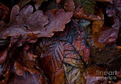 Nature Photograph - Autumn Ground by Sverre Andreas Fekjan