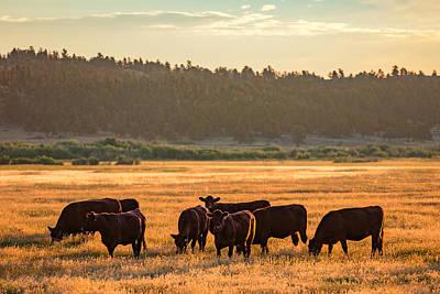 Black Angus Photograph - Autumn Herd by Todd Klassy
