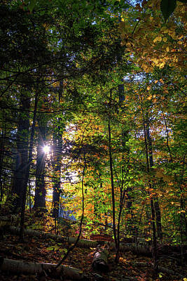 Fall Foliage Photograph - Autumn In A Maine Forest by Rick Berk