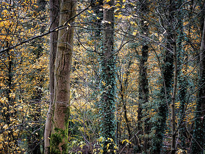 Autumn In Rawtenstall Woods Print by Philip Openshaw