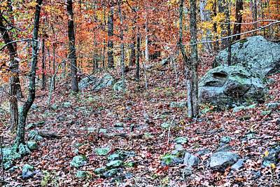 Forest Floor Photograph - Autumn In The Ozark National Forest by Kyle Findley