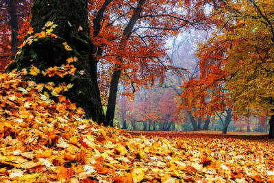 Autumn In The Woodland Print by Hannes Cmarits