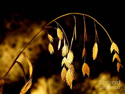 By Joe Jake Pratt Photograph - Autumn Jewelery by Joe Jake Pratt