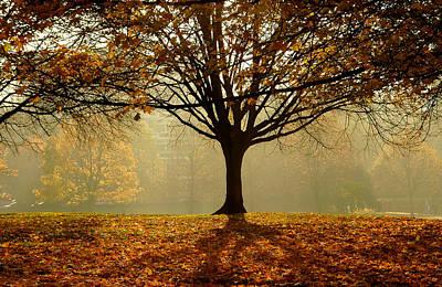 Photograph - Autumn by Kobby Dagan