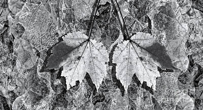 Abstract Photograph - Autumn Leaf Abstract In Black And White by Jeff Breiman