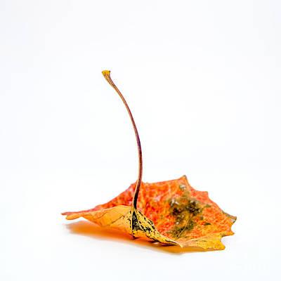 Photograph - Autumn Leaf by Bernard Jaubert