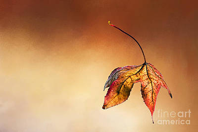 Textures And Colors Photograph - Autumn Leaf Fallen by Kaye Menner