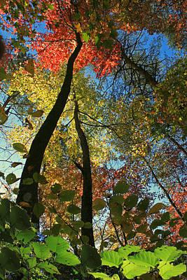 Autumn Light Print by Dave Alexander