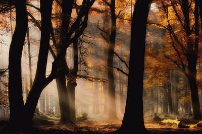 Forest Light Photograph - Autumn Light by Jan Paul Kraaij