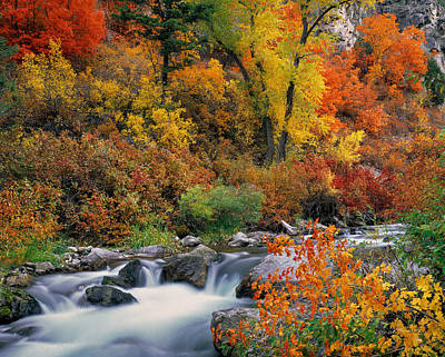 Autumn Magic Print by Leland D Howard