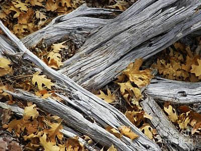 Forest Floor Photograph - Autumn Mash by Robert Ball