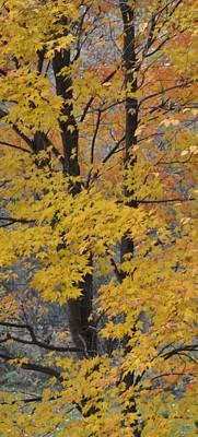 Autumn Minnesota 108 Print by Kimberly Benedict