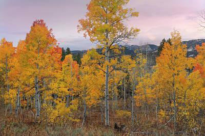 Aspens Photograph - Autumn Morning Brilliance by Leland D Howard