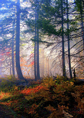 Autumn Morning Fire And Mist Print by Diane Schuster
