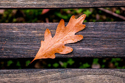 Water Drops Photograph - Autumn Oakleaf On Bench by Tom Mc Nemar