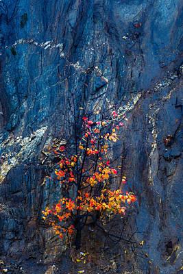 Autumn On A Rock Wall Print by Joseph Smith