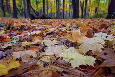 Autumn On The Forest Floor Print by Rick Berk