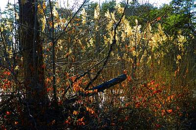 Indiana Scenes Photograph - Autumn On The Sough by Julie Dant