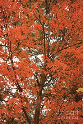 Autumn Orange - Digital Print by Carol Groenen