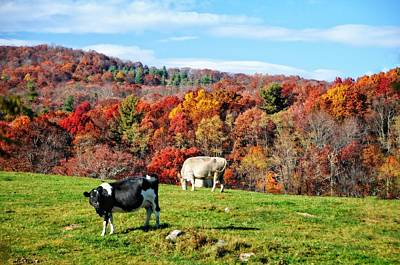 Autumn Pastures Print by Lynn Bauer