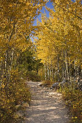 Autumn Path Print by Andrew Soundarajan