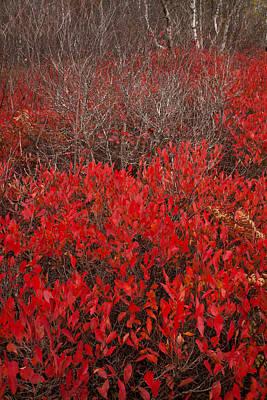 Autumn Red Barrens Print by Irwin Barrett