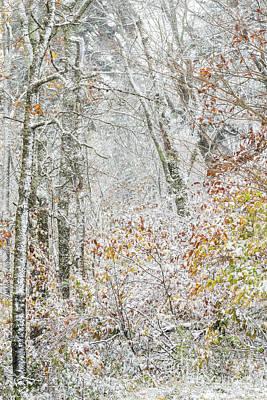 Autumn Snow Cranberry Wilderness Print by Thomas R Fletcher