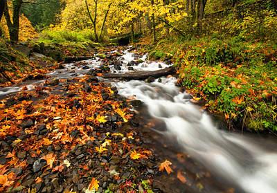 Autumn Split Print by Mike  Dawson