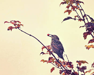 Autumn Leaf Photograph - Autumn Starling With Berry by Kerri Farley