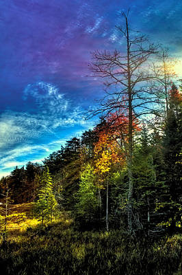 Evergreen Photograph - Autumn Sunlight In The Adirondacks by David Patterson