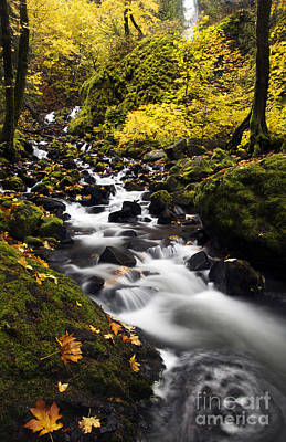 Oregon Photograph - Autumn Swirl by Mike  Dawson