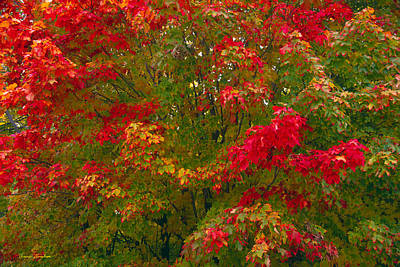 Collectible Photograph - Autumn Tapestry by Bruce Thompson