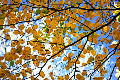 November Photograph - Autumn Tree Branches by Elena Elisseeva