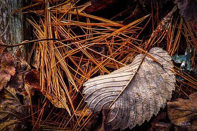 Still-life Photograph - Autumn Whispers by Bob Orsillo