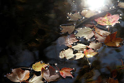 Painted Reveries Photograph - Autumn With Leaves On Water by Emanuel Tanjala