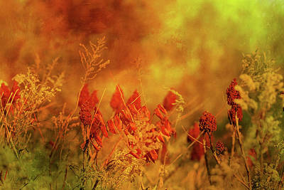 Autumn Wonders Print by Theresa Campbell
