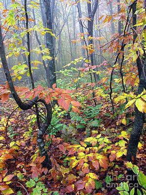 Autumn Woodland Print by Thomas R Fletcher