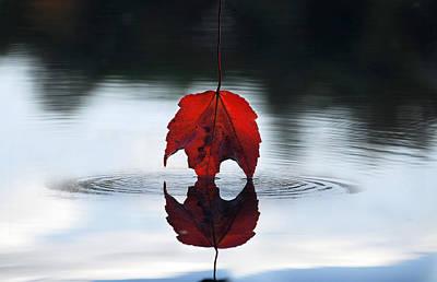 Autumns Final Descent Print by William Carroll