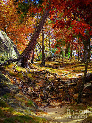 Base Path Photograph - Autumn's Tangled Root Path by Stephanie Forrer-Harbridge
