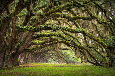 Avenue Of Oaks - Charleston Sc Plantation Live Oak Trees Forest Landscape Print by Dave Allen